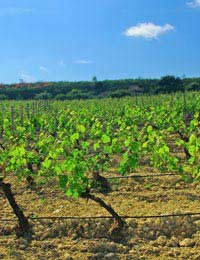 The Rioja Region & Wine Production